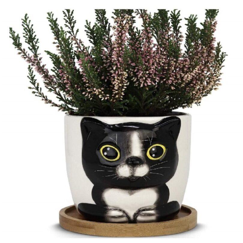 macetas para escritorio de oficina de gatos
