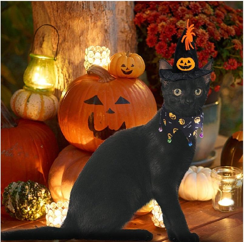halloween de gatos